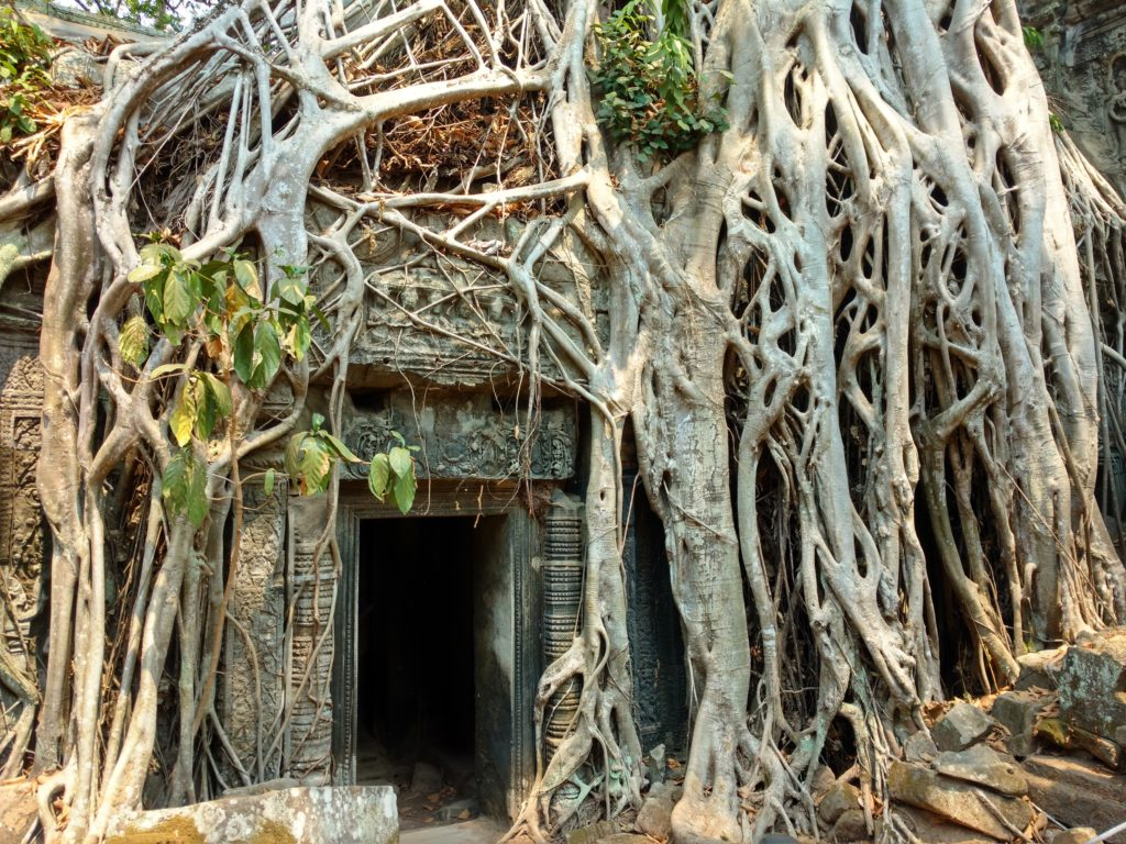 Ta Prohm Tomb Raider angkor cambodge blog voyage 36