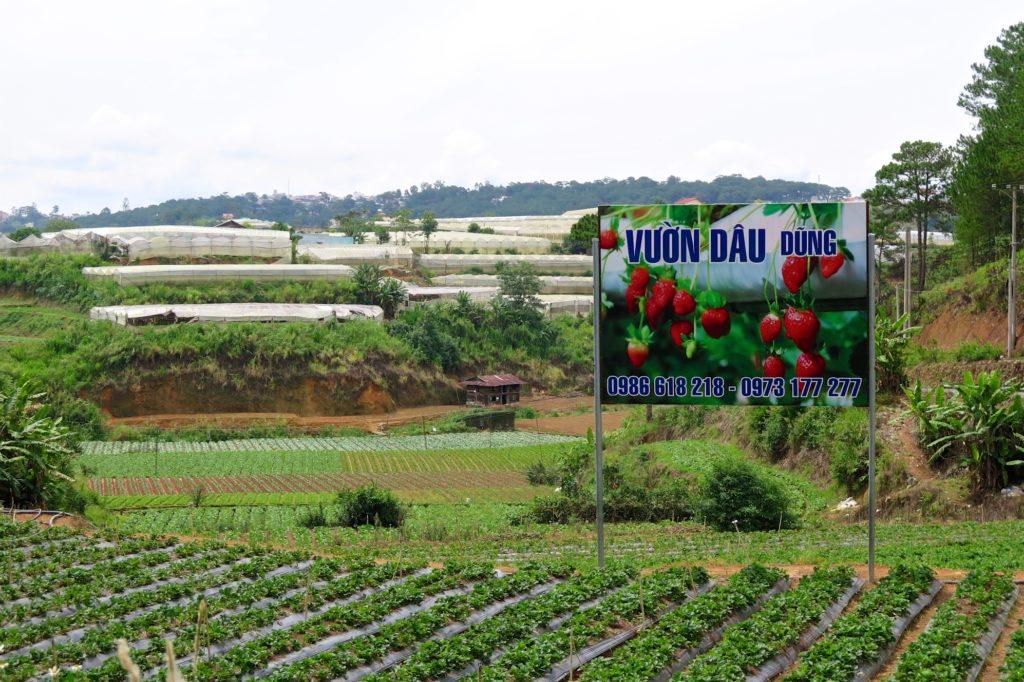 Fraises Dalat Vietnam blog voyage 2016 26