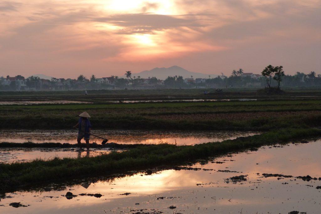 Rizieres Hoi An Vietnam blog voyage 2016 34