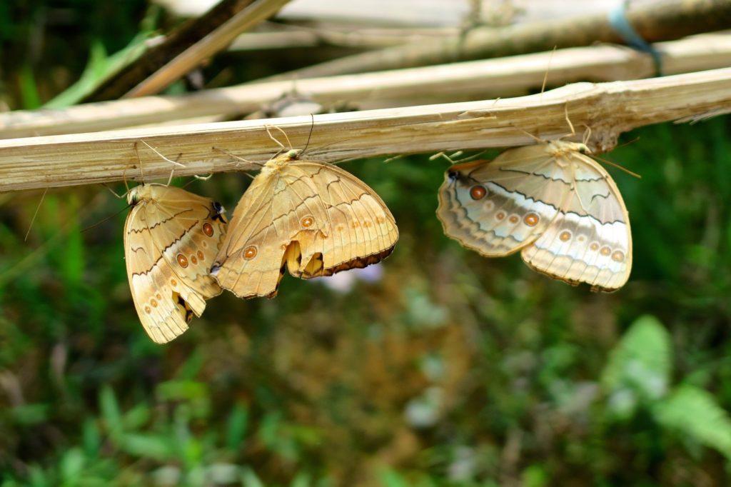 Papillons de nuit Trek Sapa Vietnam blog voyage 2016 14