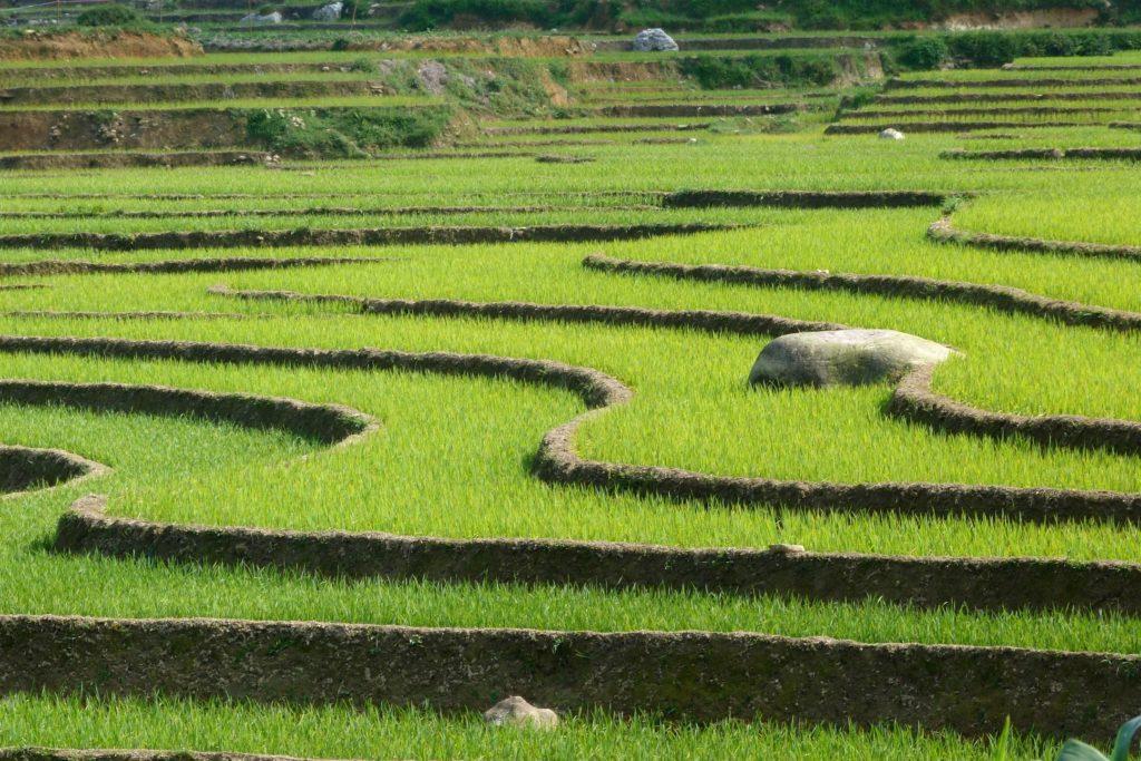 Rizieres Trek Sapa Vietnam blog voyage 2016 21