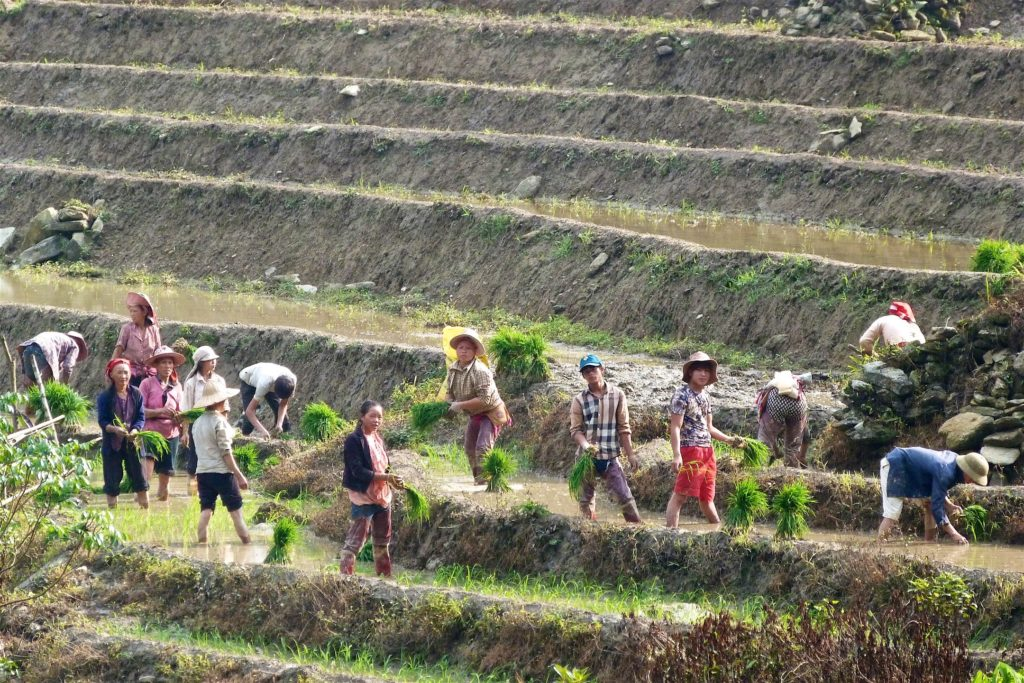 Travail rizieres Trek Sapa Vietnam blog voyage 2016 34