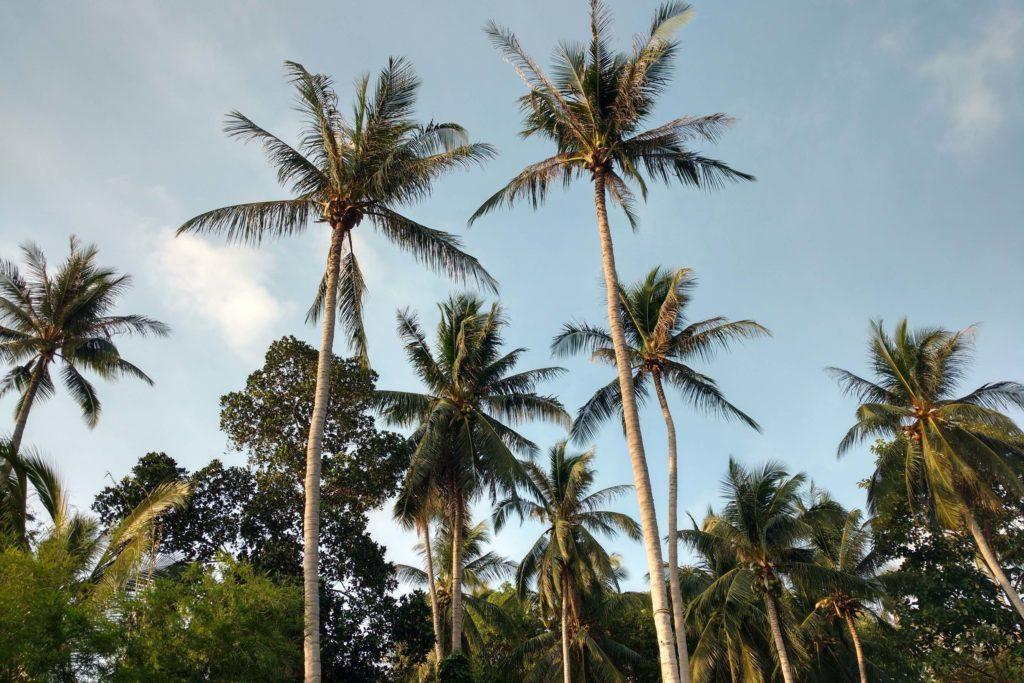 Palmitos Koh Phangan Thailande blog voyage 2016 26