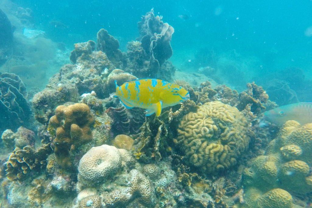 Hin Wong Beach Koh Tao Thailande blog voyage 2016 9