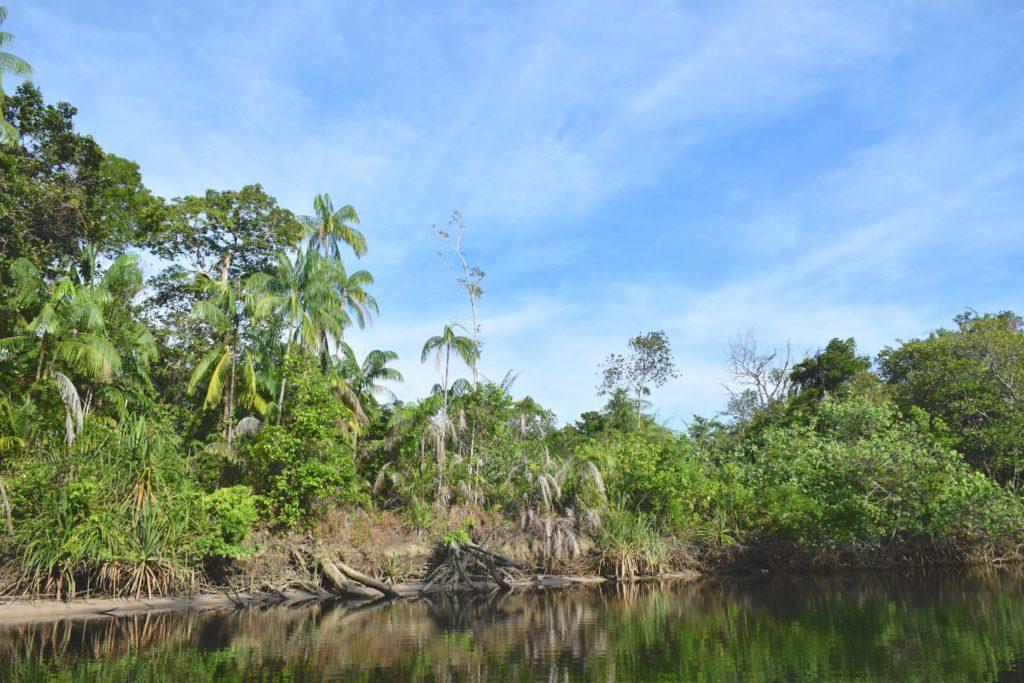 Mangrove Cherating Malaisie blog voyage 2016 21