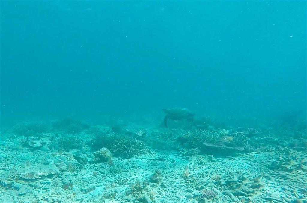 Tortue Secret beach Pulau Tioman Malaisie blog voyage 2016 16