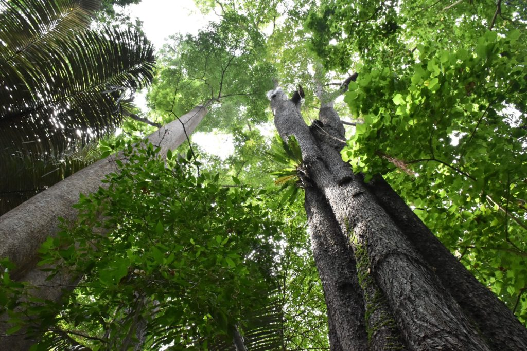 Jungle trek Palau Tioman Malaisie blog voyage 2016 36