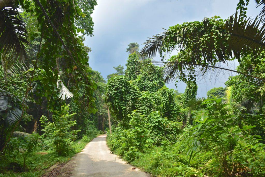 Jungle trek Palau Tioman Malaisie blog voyage 2016 39