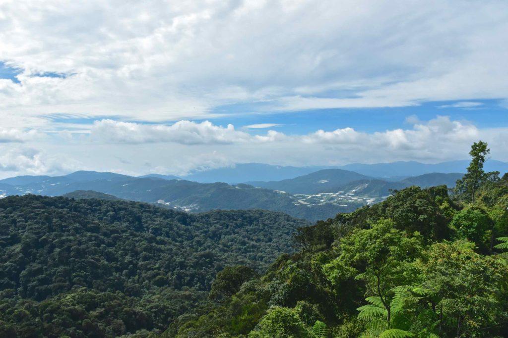 Gunung BrinchangTanah Rata Cameron Highlands Malaisie blog voyage 2016 13