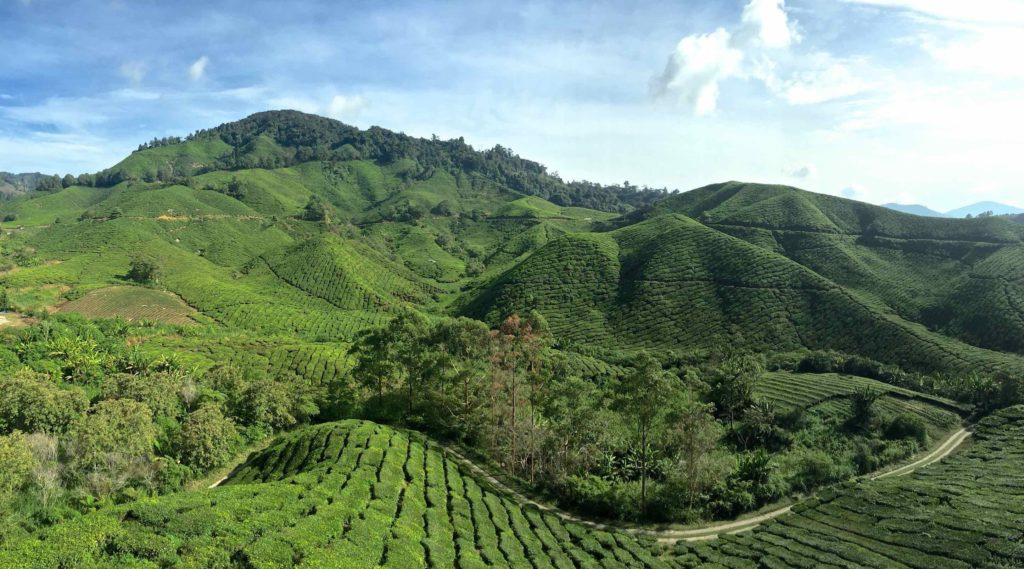 BOH Tea Plantation Tanah Rata Cameron Highlands Malaisie blog voyage 2016 7