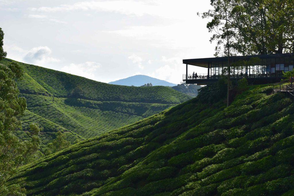 Terrasse Tanah Rata Cameron Highlands Malaisie blog voyage 2016 9