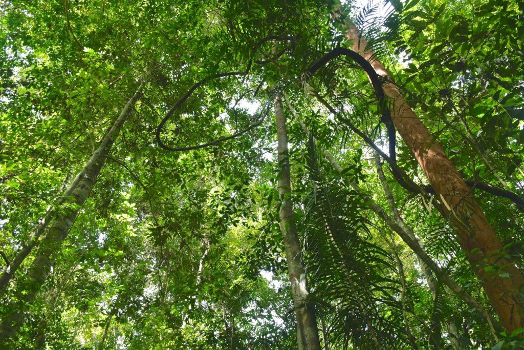 Trek Taman Negara Malaisie blog voyage 2016 15