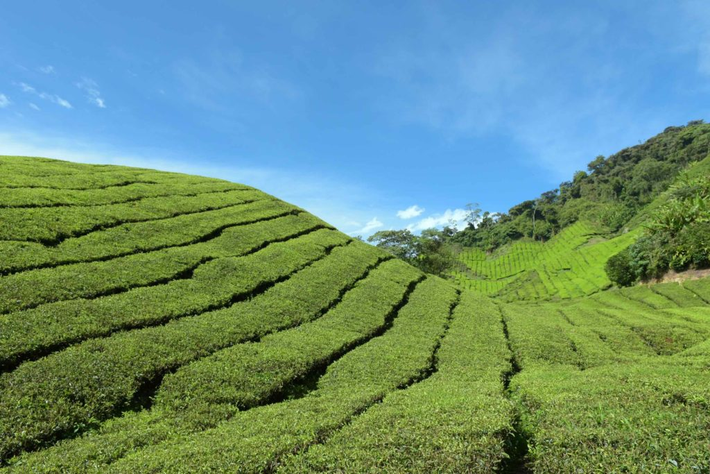 Windows xp Tanah Rata Cameron Highlands Malaisie blog voyage 2016 12