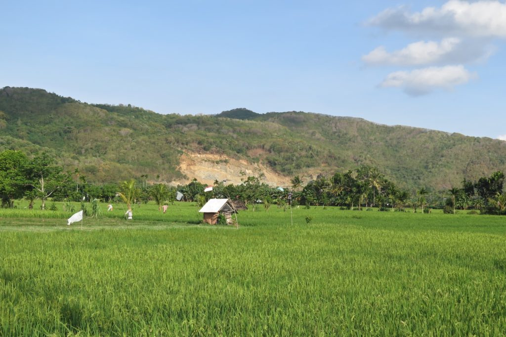 Rizières senggigi-lombok-indonesie-blog-voyage-2016-47