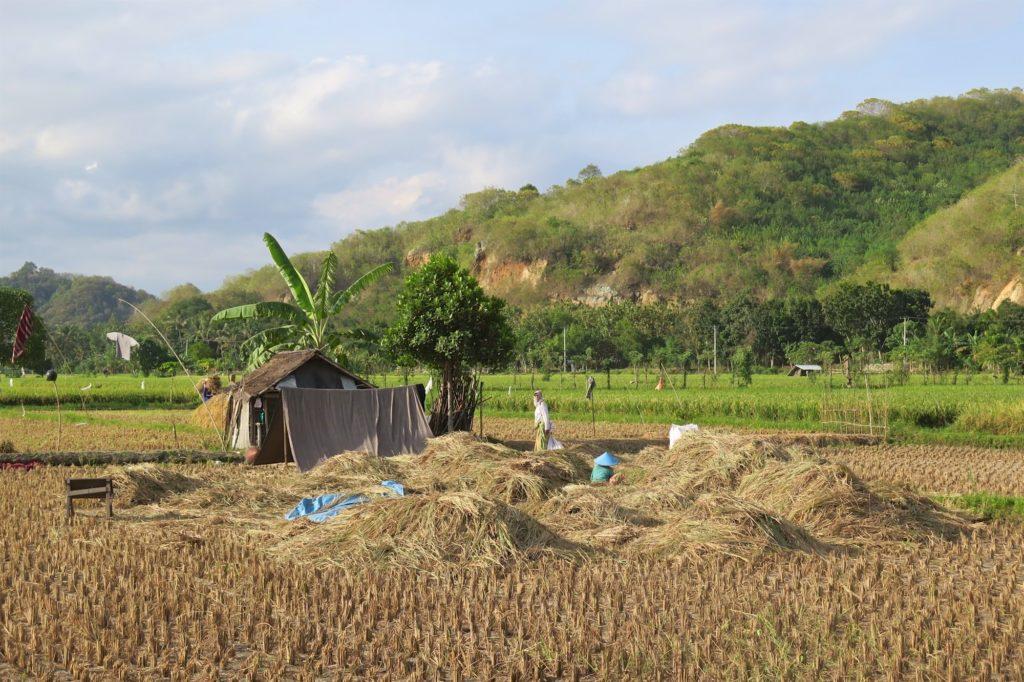 Zone de battage senggigi-lombok-indonesie-blog-voyage-2016-48