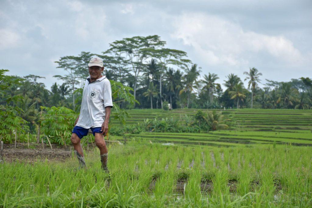 Rizières ubud-indonesie-blog-voyage-2016-15