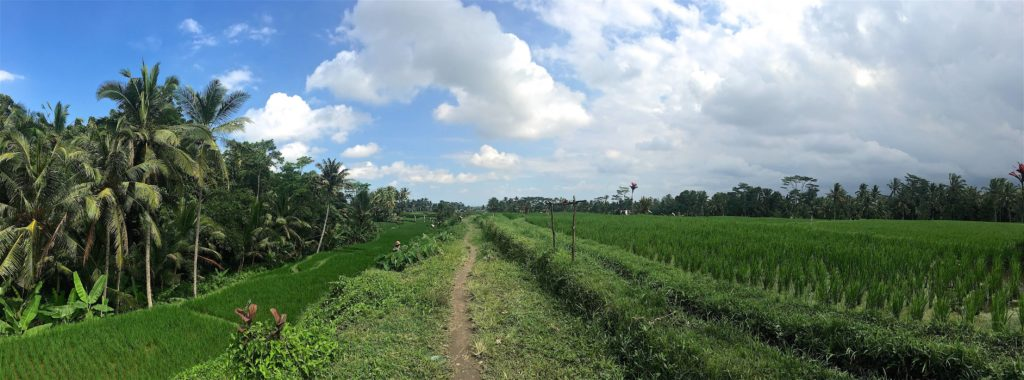 Chemin rizières ubud-indonesie-blog-voyage-2016-28