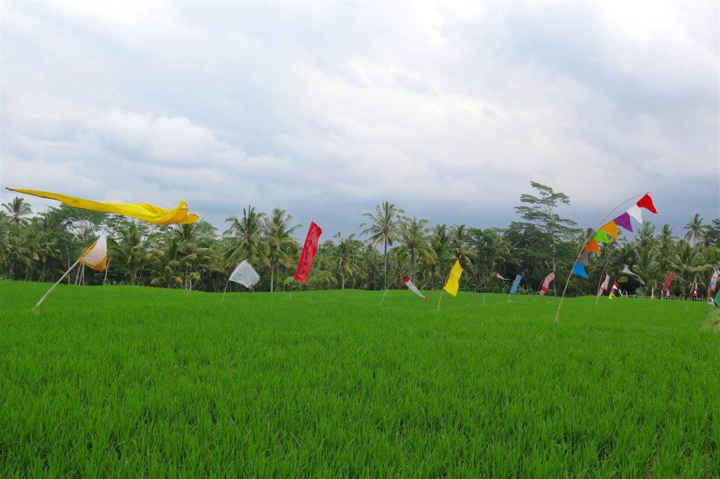 Rizières ubud-indonesie-blog-voyage-2016-30