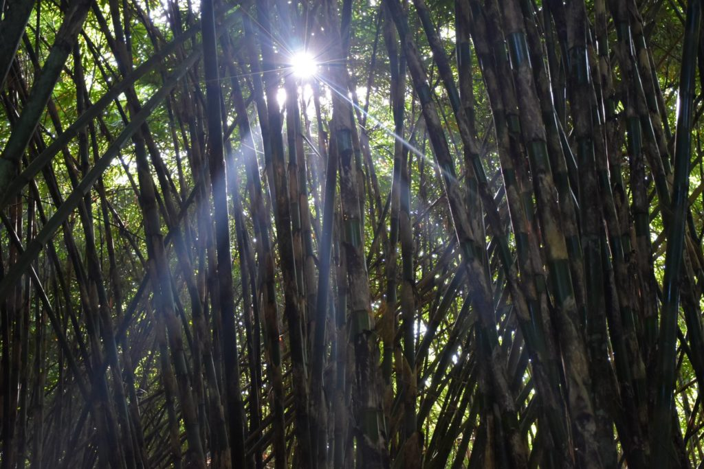 Bamboo forest ubud-indonesie-blog-voyage-2016-37