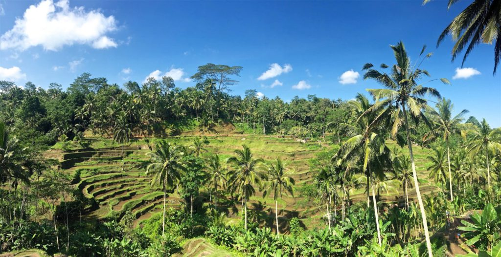 Rizières terrasses Tegallalang ubud-indonesie-blog-voyage-2016-47