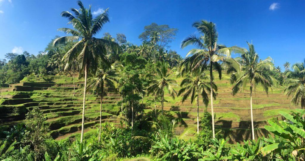 Rizières terrasses Tegallalang ubud-indonesie-blog-voyage-2016-49