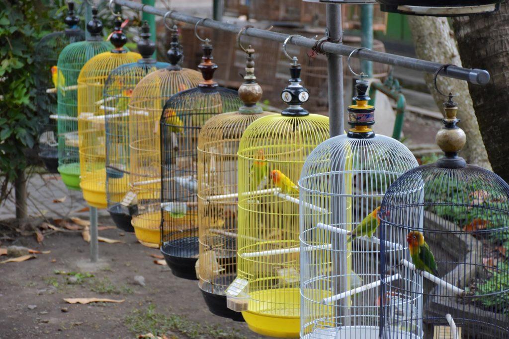 Marché aux oiseaux yogyakarta-borobudur-prambanan-indonesie-blog-voyage-2016-11