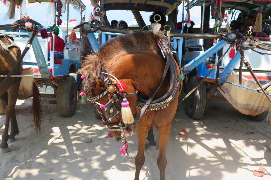 Cheval gili-air-gili-meno-lombok-indonesie-blog-voyage-2016-17