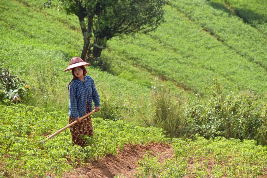 Femme champs Trek-Kalaw-Inle-Myanmar-blog-voyage-2016 28