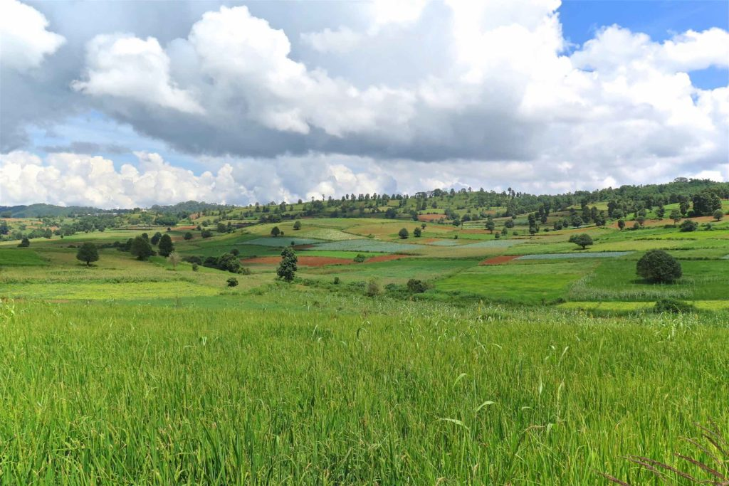 Mountain rice Trek-Kalaw-Inle-Myanmar-blog-voyage-2016 37