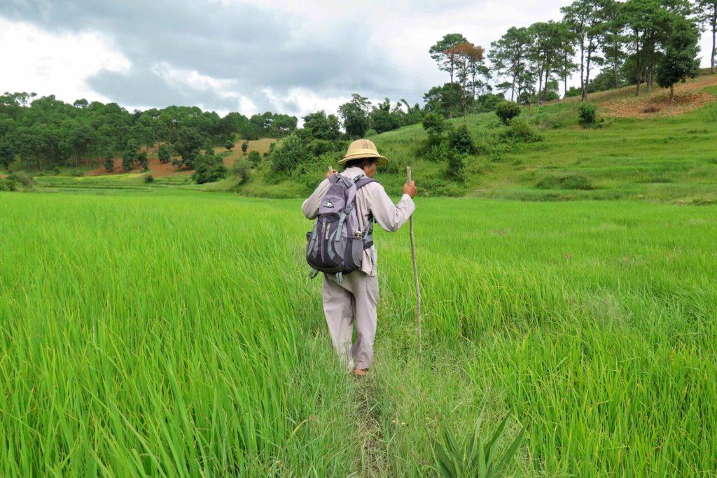 Traversée rizières Trek-Kalaw-Inle-Myanmar-blog-voyage-2016 47
