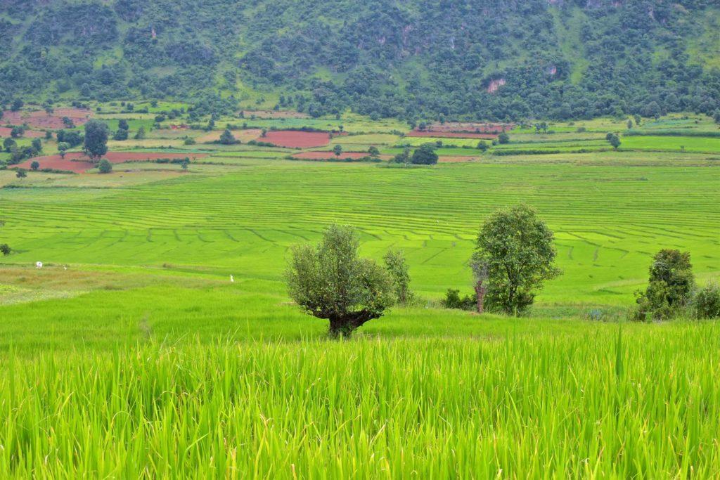 Rizieres Trek-Kalaw-Inle-Myanmar-blog-voyage-2016 51