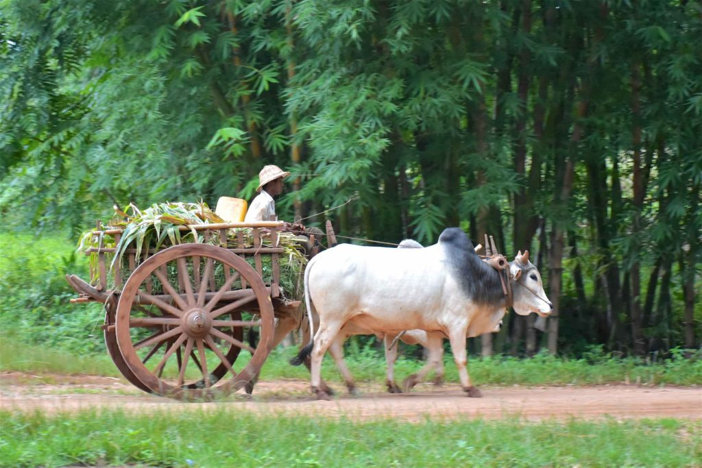 Charrette Trek-Kalaw-Inle-Myanmar-blog-voyage-2016 56