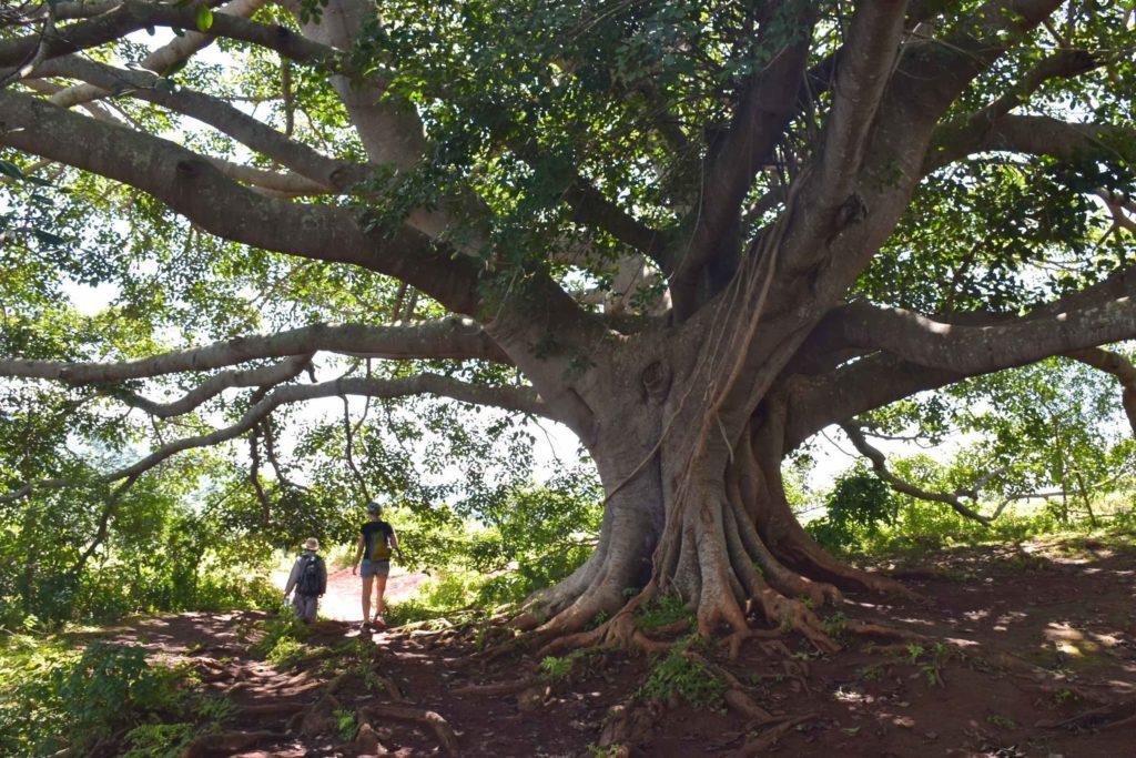 Banian Trek-Kalaw-Inle-Myanmar-blog-voyage-2016 76