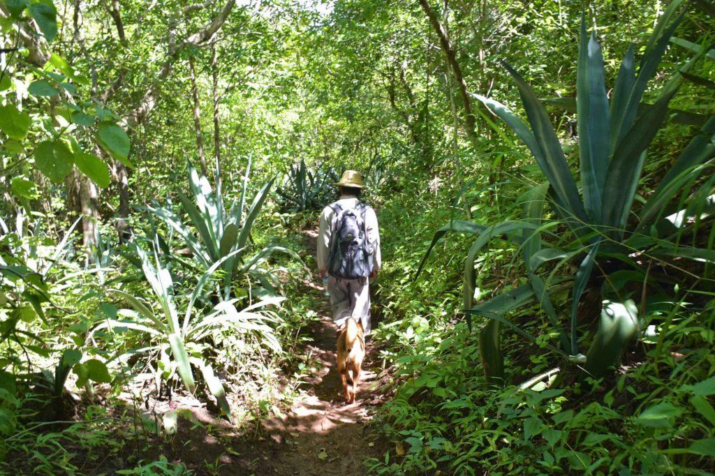 Foret Trek-Kalaw-Inle-Myanmar-blog-voyage-2016 78