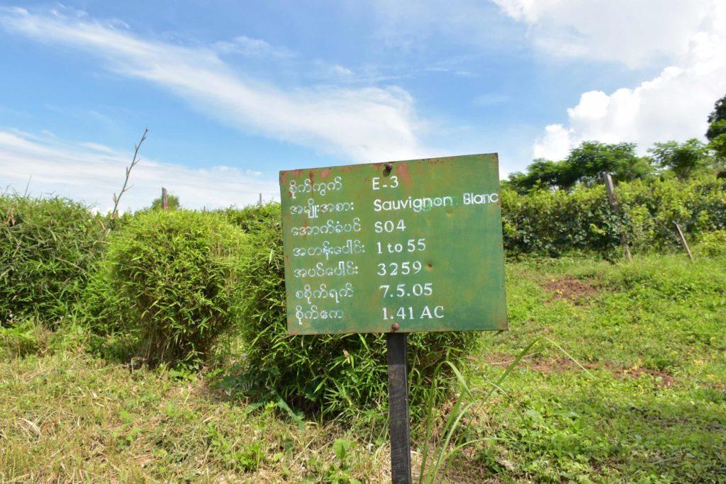 Sepages francais Lac-Inle-Myanmar-blog-voyage-2016 14