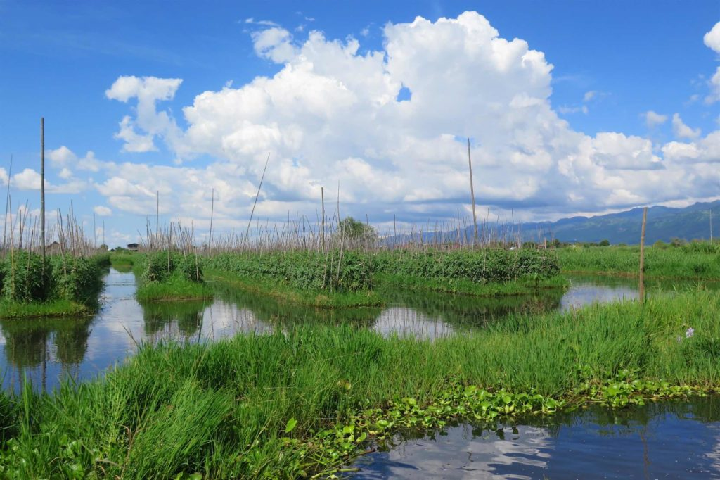 Jardin flottant Lac-Inle-Myanmar-blog-voyage-2016 4