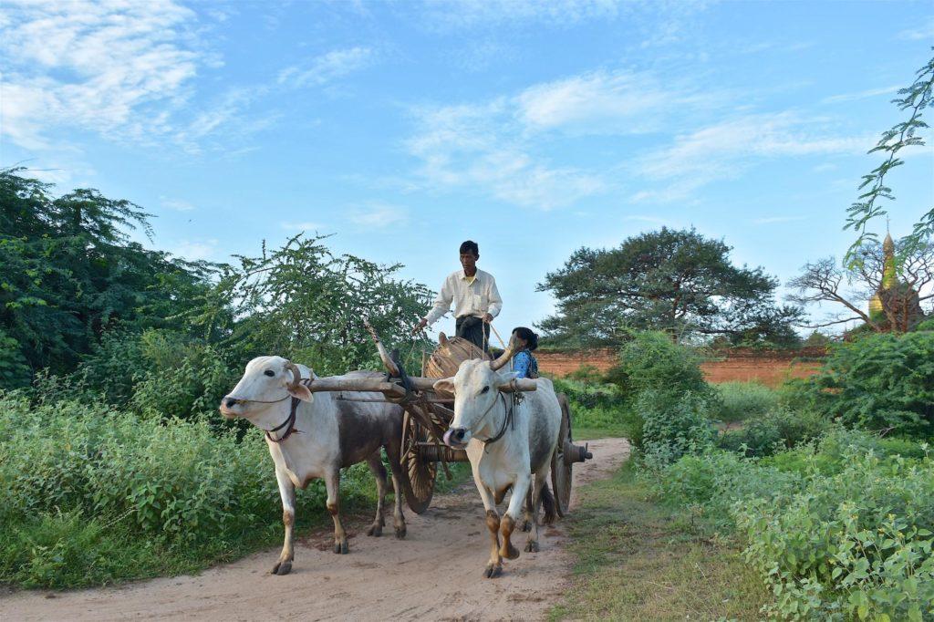 Charrette Decouverte-Bagan-Myanmar-Birmanie-blog-voyage-2016 63