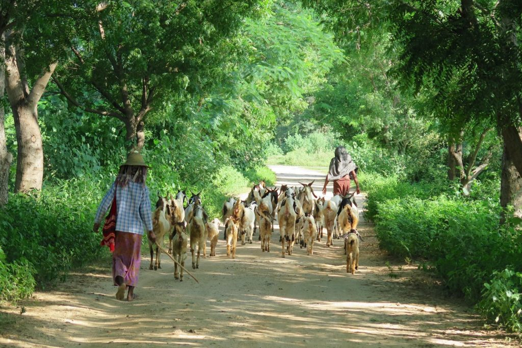 Vie quotidienne Decouverte-Bagan-Myanmar-Birmanie-blog-voyage-2016 69