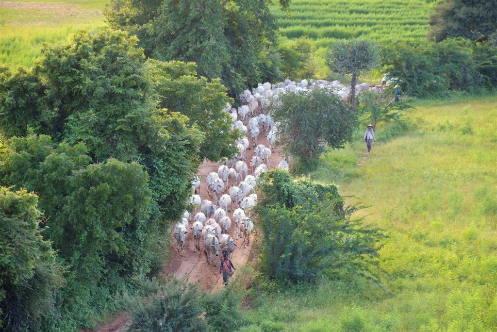 Pagode Pyathada Decouverte-Bagan-Myanmar-Birmanie-blog-voyage-2016 79