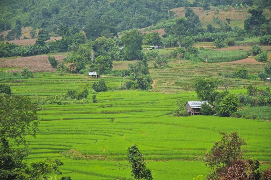 Rizières Hsipaw Myanmar blog voyage 2016 32