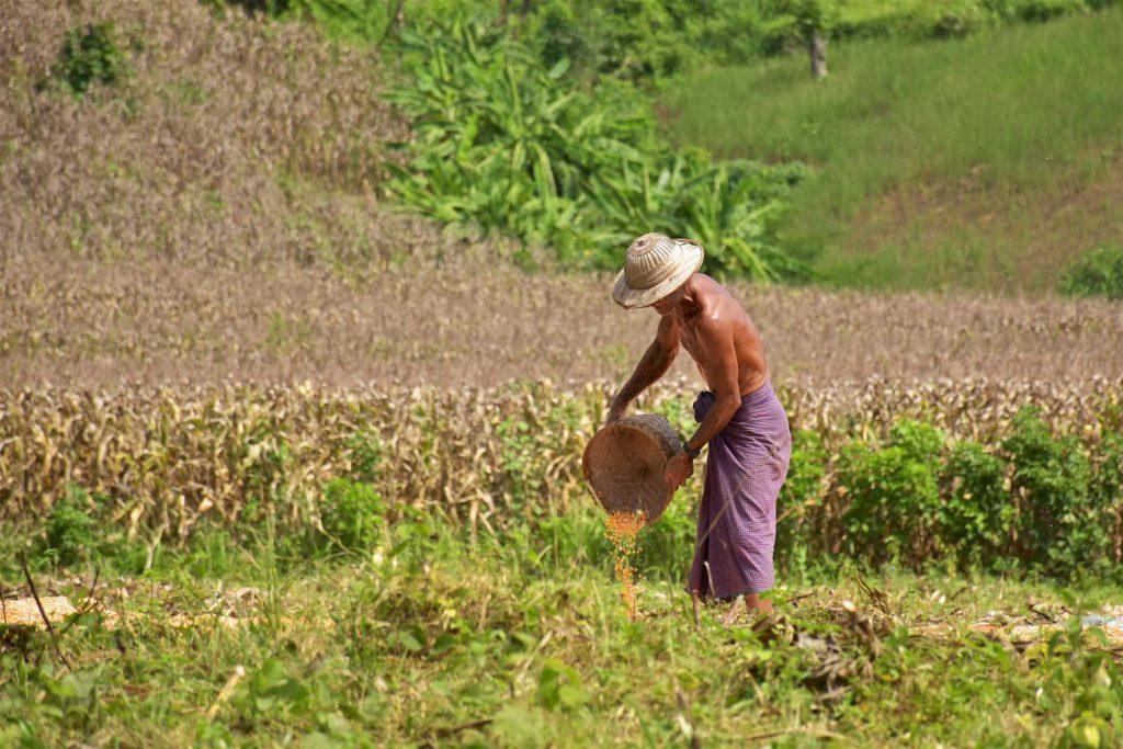 Paysan Hsipaw Myanmar blog voyage 2016 37