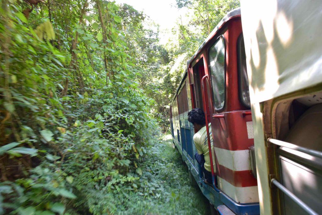 Train arbres Pyin-Oo-Lwin-Gohteik-Myanmar-blog-voyage-2016 18